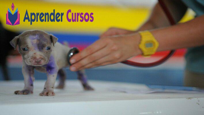 Curso de corte de cabello canino